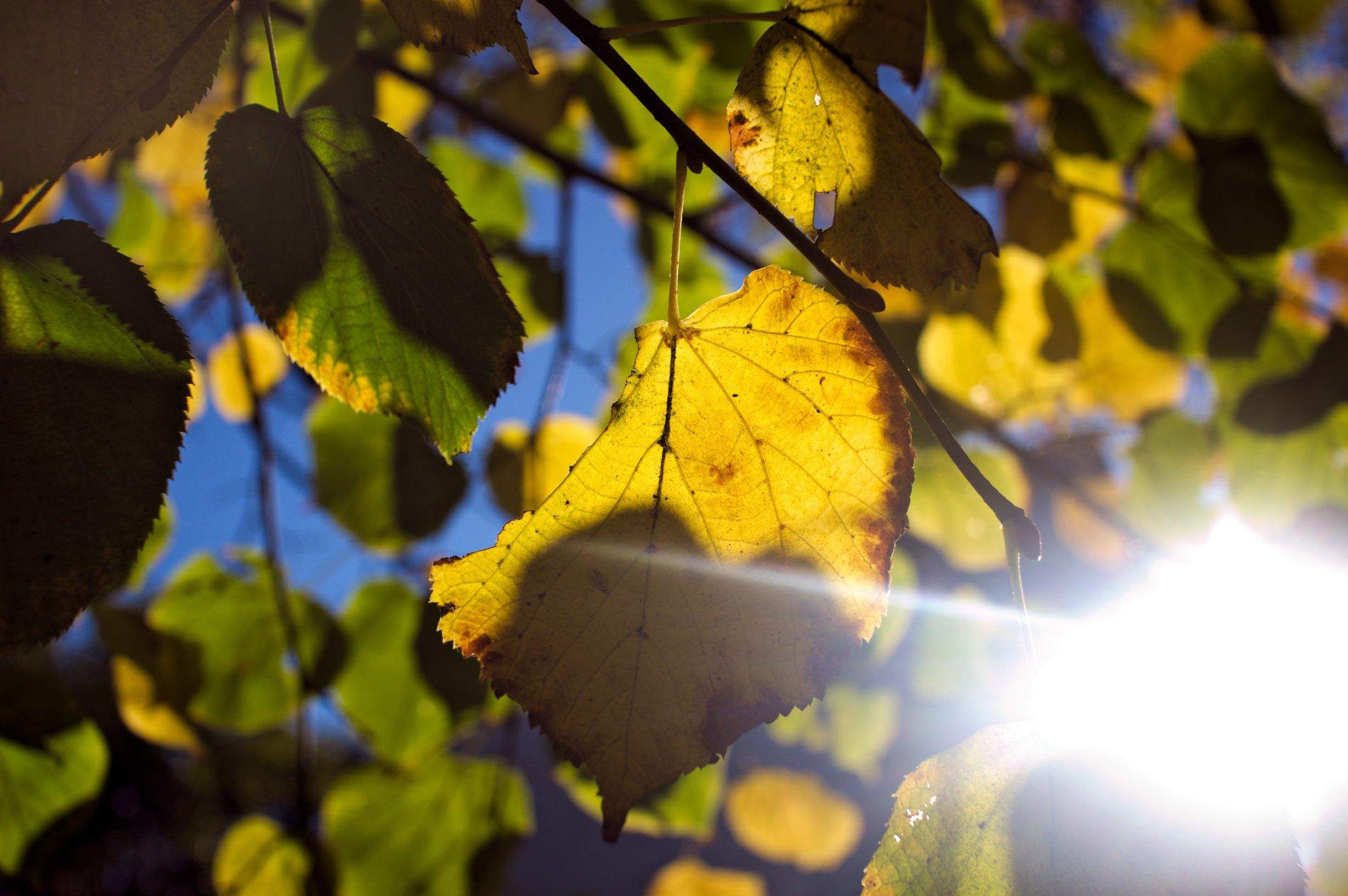 Herbstspaziergang am Schöneberger Ufer – blumes-wiese.cyana.de