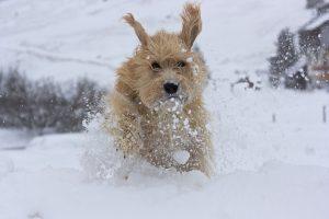 Paula im Schnee II