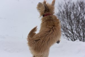 Paula im Schnee III